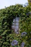 Gömt fönster Royaltyfria Bilder