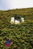 gömt murgrönatecken royaltyfria foton