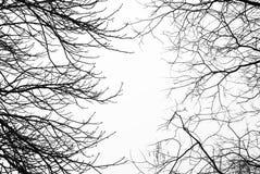 Gör bar avlövade trädfilialer med vit himmel bakom royaltyfri foto