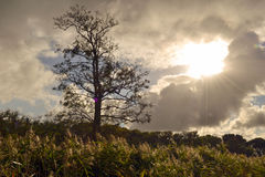 Gör bar det ensliga trädet i höstsolsken Arkivfoto