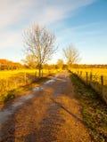 Gör bar fält för blå himmel för bygdgrändfält träd arkivfoton