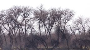 Gör bar filialer av ett träd arkivfoto