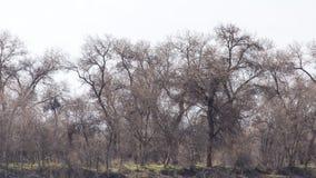 Gör bar filialer av ett träd royaltyfria bilder