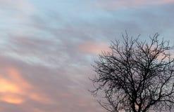 Gör bar filialer av ett träd på solnedgången royaltyfri foto