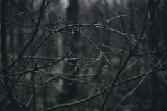 Gör bar filialer i vintern fotografering för bildbyråer