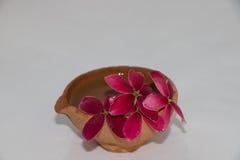 gör blommor henne förälskelsemeddelandet mycket owkruka dig Royaltyfri Foto