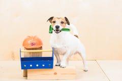 Gör det själv DIY-begreppet med den roliga hunden som byggmästareassistent Royaltyfria Foton