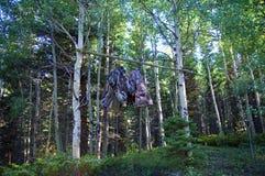 Gör förskjutningsbjörnpåsen som hänger i träd Campa säkerhet arkivbilder