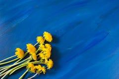 Gör mellanslag moderiktiga ljusa blått målad bakgrund med kopian och ljusa gula blommor av maskrosor som ligger på den Royaltyfri Bild
