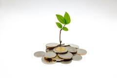 Gör pengar att växa Arkivbild