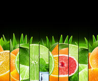 Gör randig färgrika citrusfrukter för regnbåge samlingen på de svarta lodisarna Royaltyfri Fotografi