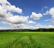 gör ren den ekologiska miljön Royaltyfri Foto
