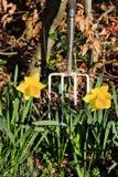 gör ren den trädgårds- ståendefjädern Arkivbilder