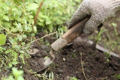 Gör ren gräset i gården, version 3 Royaltyfri Foto
