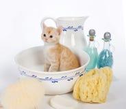 gör ren kattungen Royaltyfria Bilder