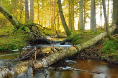 gör ren nytt strömvatten för begreppet Fotografering för Bildbyråer