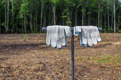 Gör ren och att arbeta handskar som hänger på hjälpmedlet för att plantera trädplantor, för plantera för skog Arkivbild