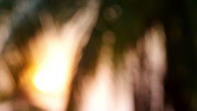 Gör suddig den härliga naturpalmträdet med den ljusa vågen för bokehsolen i solnedgång lager videofilmer
