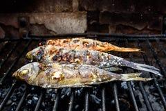 Göra fisken på en bbq att grilla gallret över varmt kol Royaltyfria Foton