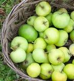 Göra grön äpplen Arkivbilder