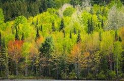 Göra grön av skogarna Arkivfoto