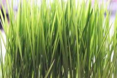 Göra grön den första skördcloseupen Arkivfoto