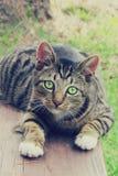 Göra grön den synade katten som stirrar in i framtiden royaltyfria bilder