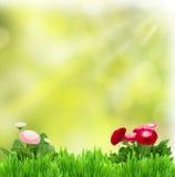 Göra grön gräs med tusenskönablommor Fotografering för Bildbyråer