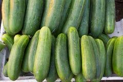 Göra grön gurkan Royaltyfri Foto