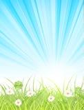 Göra grön lawn fjädrar in morgon vektor illustrationer