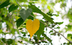 Göra grön och gulna bakgrundsbilden från naturligt lövfällande Arkivbilder