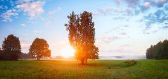 Göra klar i ängen i solig sommarmorgon, sommarbakgrund Royaltyfri Foto