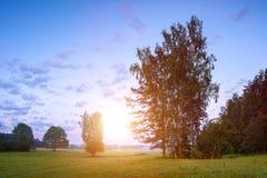 Göra klar i ängen i solig sommarmorgon, sommarbakgrund Arkivfoton