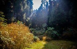 Göra klar i skogen Fotografering för Bildbyråer