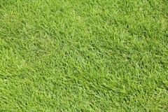 Göra perfekt mejat gräs Arkivbild