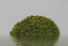 Göra sammandrag den isolerade ön med grön vegetation på vattnet med Royaltyfri Bild