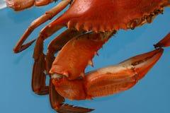 göra sammandrag den kokt krabban Fotografering för Bildbyråer