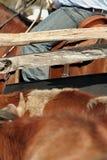 göra sammandrag rodeoen Royaltyfri Bild