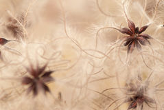Göra sammandrag växtfrö arkivfoton