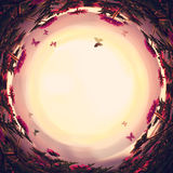 göra sammandrag virvlad runt bakgrund av magiska sagablommor och fjärilar på solnedgångljus royaltyfri bild