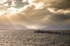 Göra till kung den Cormorant kolonin, den gamla skeppsdockan, Puerto Natales, antarktiska Patag fotografering för bildbyråer