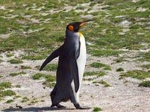 göra till kung pingvinet Royaltyfri Bild