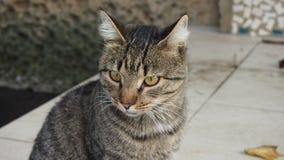 görad randig katt Fotografering för Bildbyråer