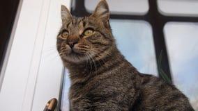 görad randig katt Royaltyfri Foto