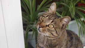 görad randig katt Arkivfoton