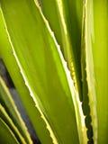 görar grön taggar Royaltyfria Bilder