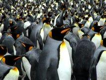 görar till kung pingvin Fotografering för Bildbyråer