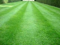 görat randig gräs Royaltyfri Fotografi