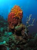 Gąbka i rośliny w 50 ft woda na krawędzi bezdenności fotografia royalty free