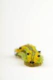 gąsienica odizolowywająca Zdjęcie Royalty Free